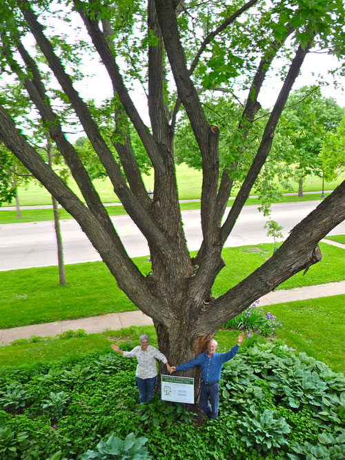 "Ann Mayhew and Art Oglesby, 1156 Lexington Parkway N., and ""their"" silver maple. (Photo by Val Cunningham)"