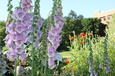 The University of Minnesota's test gardens will be on the St. Anthony Park Garden Tour