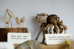 "Some of the specimens in the ""Vegetative Taxidermy"" exhibit. Photo by Angela Dimler"