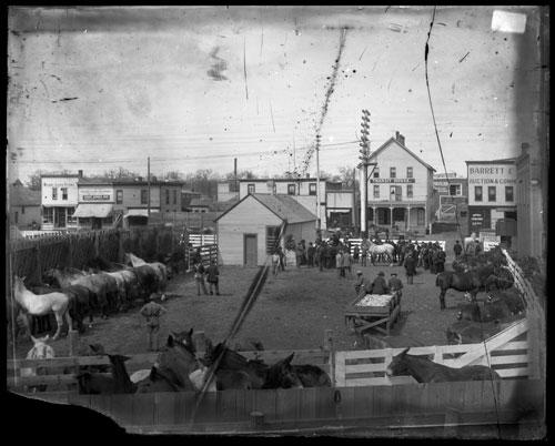 The Barrett & Zimmerman auction pens circa 1900. Photo courtesy of the Minnesota Historical Society
